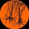 Solanaceae_100x100