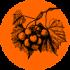 Vitis_vinifera_100x100